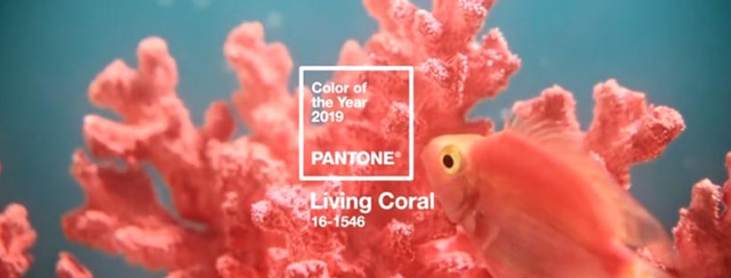 capa coral